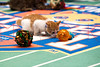 672874705SM045_Kitten_Bowl_