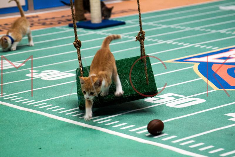 672874705SM051_Kitten_Bowl_
