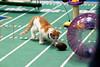 672874705SM039_Kitten_Bowl_