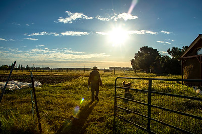 Story and photos on mornings at Heavy Dirt Farm in Davis, published in Edible Sacramento