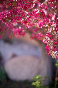 Tree Portraiture