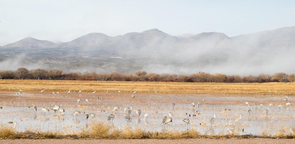 Bosque Birds