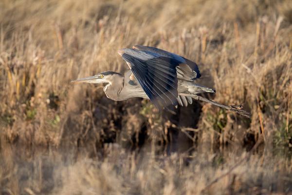 Bosque Birds (and more)