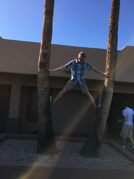 Dan climbing the palms