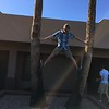 Dan climbing the palms