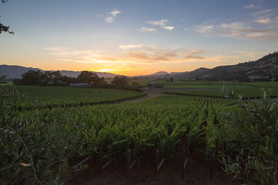 A stunning Napa Valley evening for vintner hosted dinners during Auction week.   Briana Marie Photography for Napa Valley Vintners