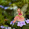 2016 July  Fairy Ava on a Blue Hydrangea Flower