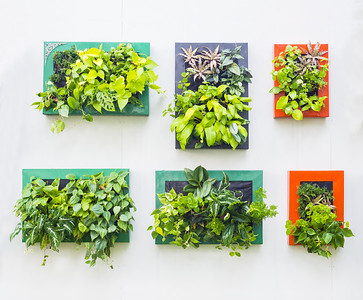 //www.dreamstime.com/royalty-free-stock-image-decorated-wall-vertical-garden-outdoor-park-image48181856