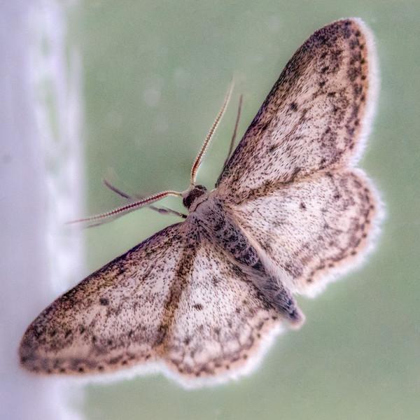 Moth in the window