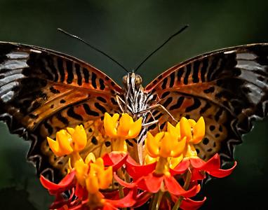 08-08 Denver Butterfly Pavillion