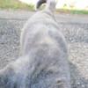 11-01-16 Dayton 63 cat