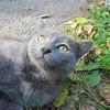 11-01-16 Dayton 77 cat