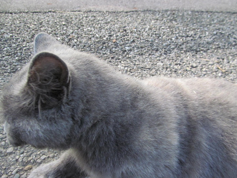11-01-16 Dayton 82 cat