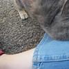 11-01-16 Dayton 64 cat