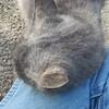11-01-16 Dayton 61 cat