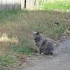 11-01-16 Dayton 57 cat