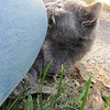 11-01-16 Dayton 67 cat