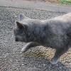 11-01-16 Dayton 68 cat