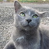 11-01-16 Dayton 81 cat