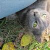 11-01-16 Dayton 74 cat