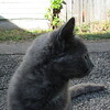 11-01-16 Dayton 70 cat