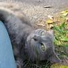 11-01-16 Dayton 75 cat
