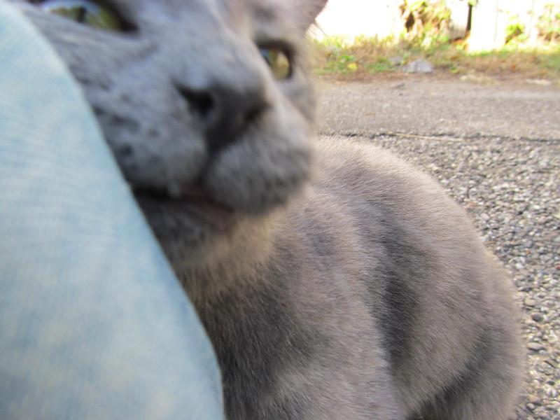 11-01-16 Dayton 71 cat