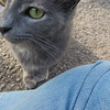 11-01-16 Dayton 62 cat
