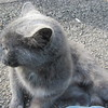 11-01-16 Dayton 80 cat