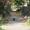 11-01-16 Dayton 56 leaves, cat