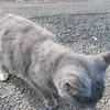 11-01-16 Dayton 60 cat