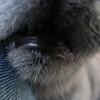 11-01-16 Dayton 69 cat