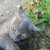 11-01-16 Dayton 79 cat