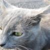 11-01-16 Dayton 59 cat