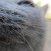 11-01-16 Dayton 72 cat