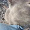 11-01-16 Dayton 58 cat