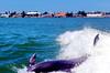 Aug22Dolphin Jet BoatCruise2