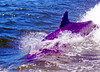 Aug22Dolphin Jet BoatCruise38