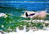 Aug22Dolphin Jet BoatCruise16