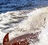 Aug22Dolphin Jet BoatCruise49