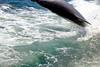 Aug22Dolphin Jet BoatCruise54