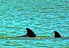 Aug22Dolphin Jet BoatCruise23