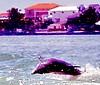 Aug22Dolphin Jet BoatCruise10