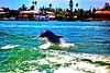 Aug22Dolphin Jet BoatCruise15