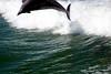 Jet Boat Dolphin Cruise Feb21_11