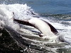 Jet Boat Dolphin Cruise Feb21_4