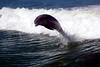 Jet Boat Dolphin Cruise Feb21_12