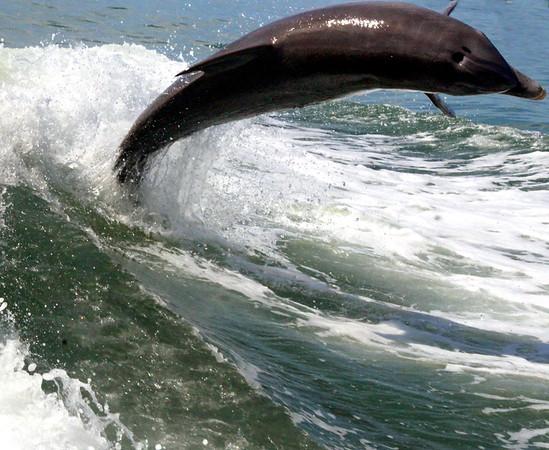 Jet Boat Dolphin Cruise Feb21_1