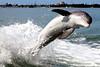 Jet Boat Dolphin Cruise Feb21_3