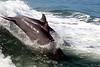 Jet Boat Dolphin Cruise Feb21_2